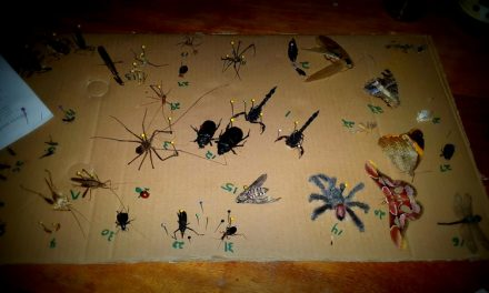 Beetles, Bugs, and Arachnids