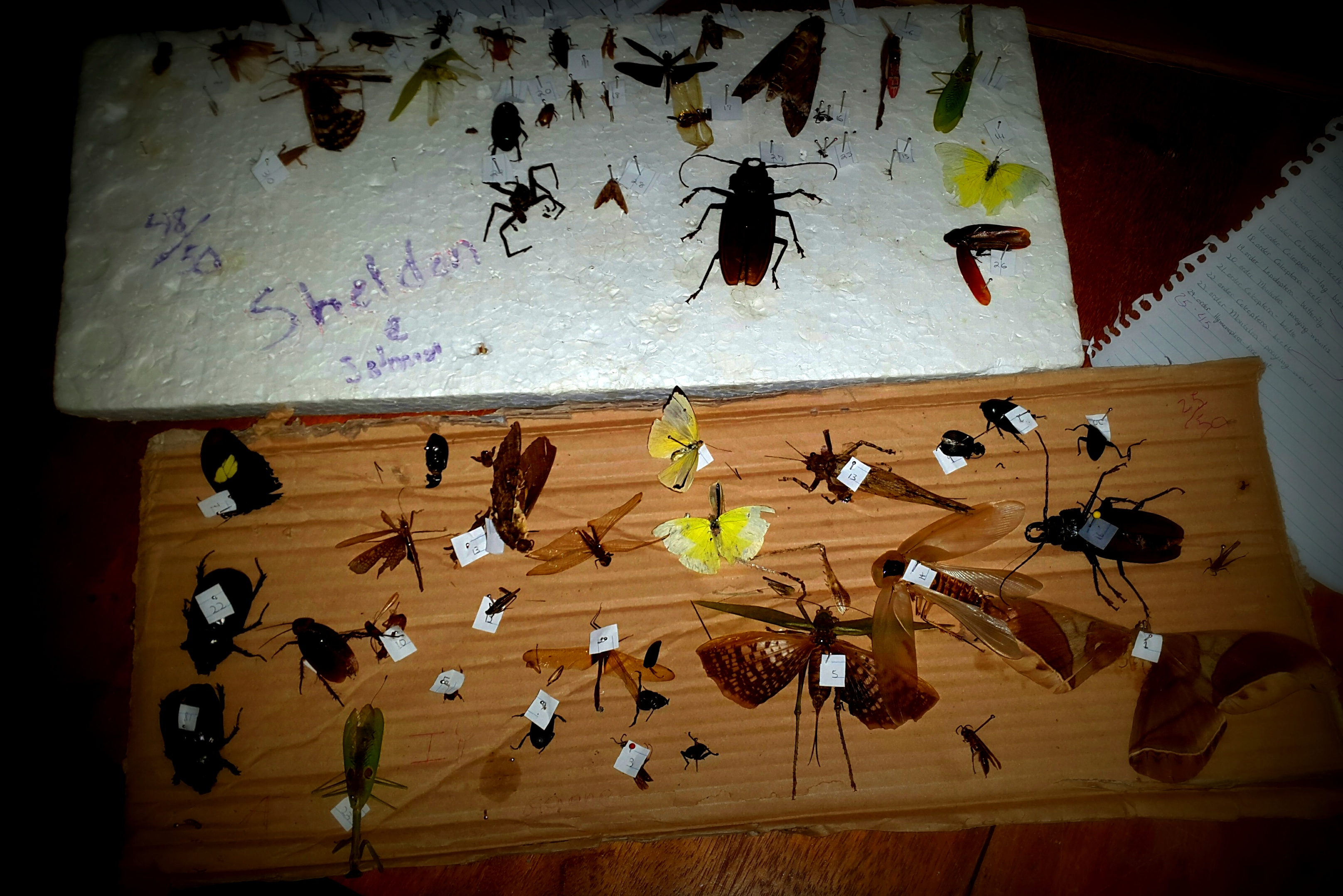 Exotic Bugs of the Amazon